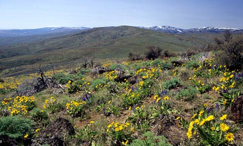 Wildflowers & Panorama, Cowiche Mtn, Snow Mountain Ranch.
