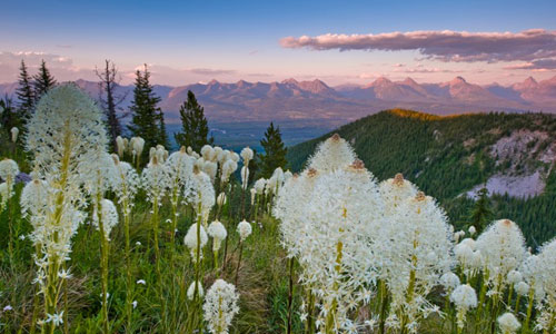 The Flathead River Valley in British Columbia with Bear Grass in foreground.