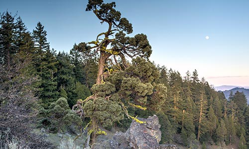 Cascade-Siskiyou National Monument Expanded